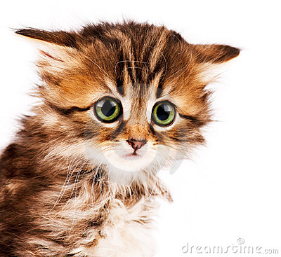 Free Cute Kitten Royalty Free Stock Photo - 19723795
