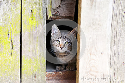 Cute Kitten Stock Photos - Image: 25709773