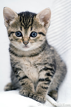 Free Cute Kitten Stock Image - 3511471