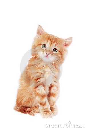 Cute Kitten Stock Photos - Image: 5488363