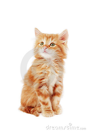 Free Cute Kitten Royalty Free Stock Images - 7805869