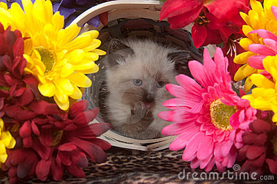Cute Kitten In Basket Surrounded By Flowers Royalty Free Stock Photography - Image: 15133657