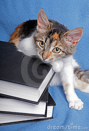 Cute kitten with a books