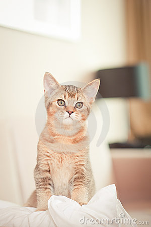 Cute kitten on cushion
