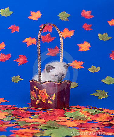 Cute kitten and fall leaves