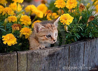 Cute kitten in flowers