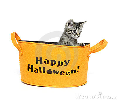 Cute kitten in Halloween basket