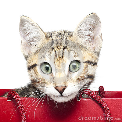 Free Cute Kitten In A Red Shopping Bag Stock Photography - 28966472