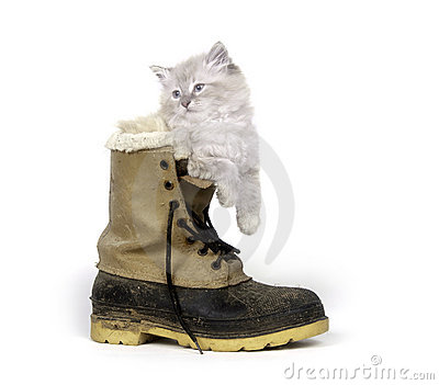 Cute kitten inside of boot
