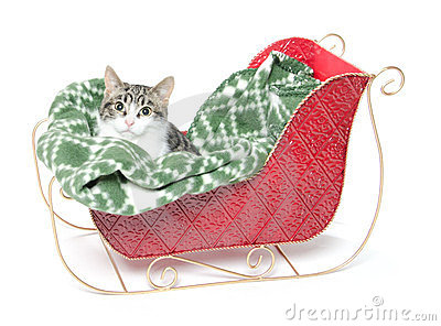 Cute kitten in sled