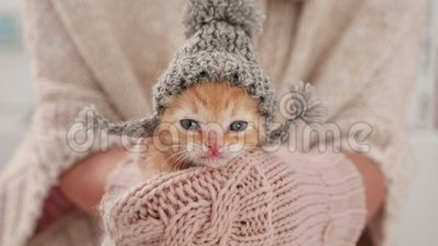 Cute Kitten zubereitet für den Winter, mit gewirktem Wollhathut stock video footage