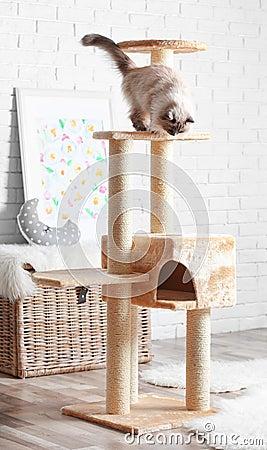 Free Cute Kitty On Cat Tree Stock Photography - 105127432