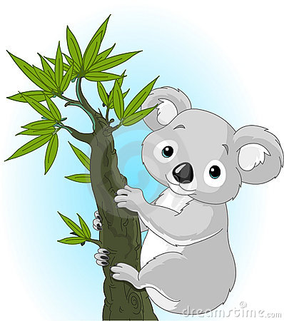 Cute koala on a tree