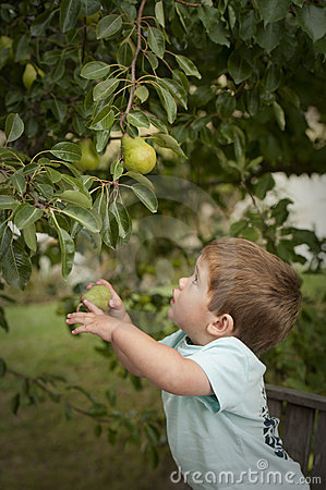 Cute little boy picking fruit from tree