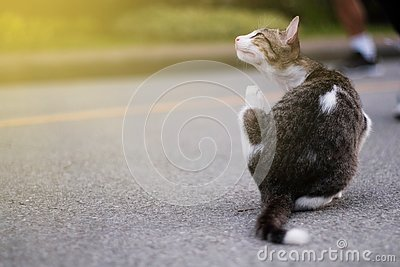 Cute little cat Stock Photo