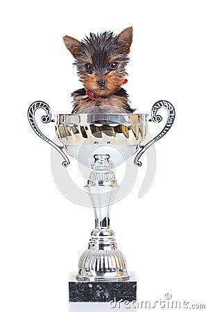 Free Cute Little Champion Stock Photo - 21617490