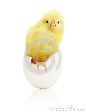 Free Cute Little Chicken Coming Out Of A White Egg Stock Image - 40455291