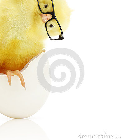 Free Cute Little Chicken Coming Out Of A White Egg Royalty Free Stock Images - 40489269