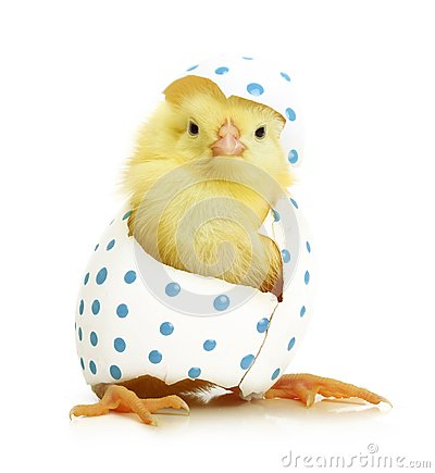 Free Cute Little Chicken Coming Out Of The Easter Egg Royalty Free Stock Photos - 49772738