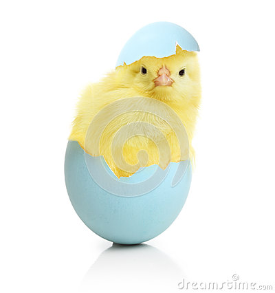Free Cute Little Chicken Coming Out Of The Easter Egg Royalty Free Stock Images - 49772999
