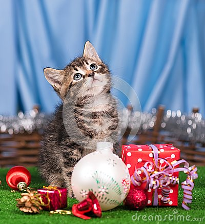 Free Cute Little Kitten Royalty Free Stock Image - 100059596