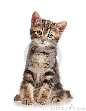 Free Cute Little Kitten Royalty Free Stock Photos - 77657308