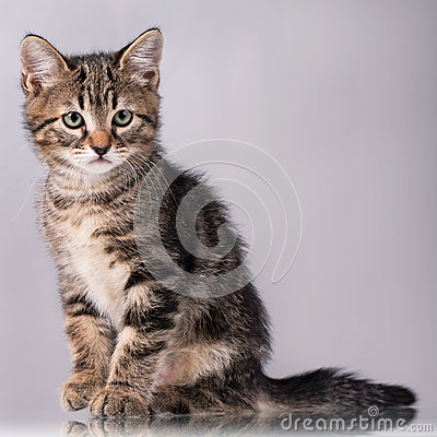 Free Cute Little Kitten Royalty Free Stock Images - 78065759