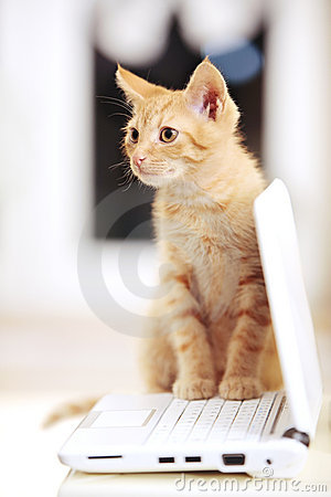 Cute little kitten on a notebook laptop