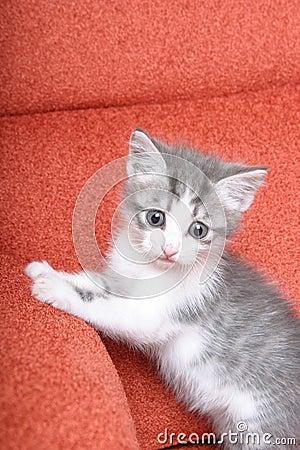 Free Cute Little Kitten On Bright Orange Sofa Stock Images - 1081534
