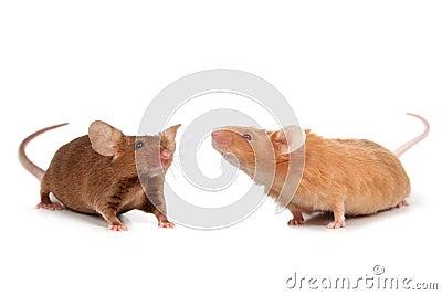 Cute little mice