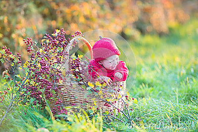 Cute little newborn baby in basket with red berries
