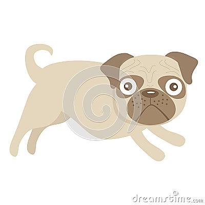 Cute little pug dog