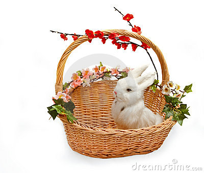Cute little rabbit in basket