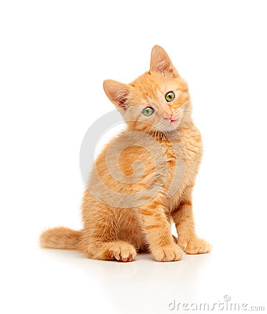 Free Cute Little Red Kitten Sitting And Looking Straight At Camera Stock Image - 59976901