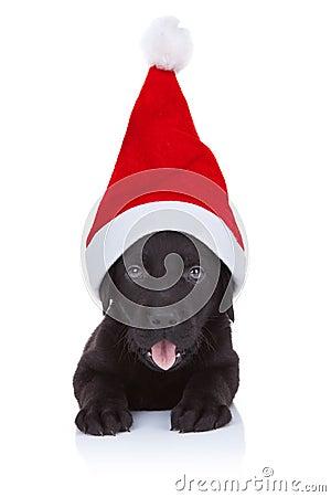 Free Cute Little Santa Stock Photography - 21362902