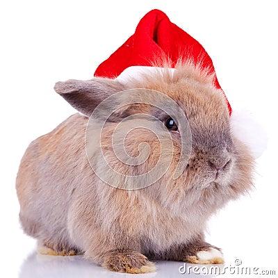 Cute little santa bunny