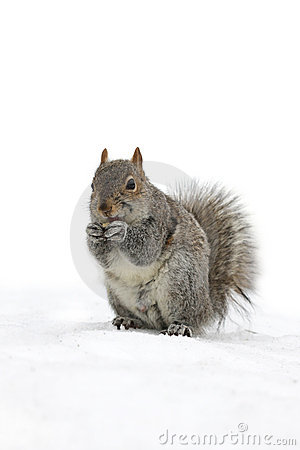 Free Cute Little Squirrel Royalty Free Stock Photo - 5402955