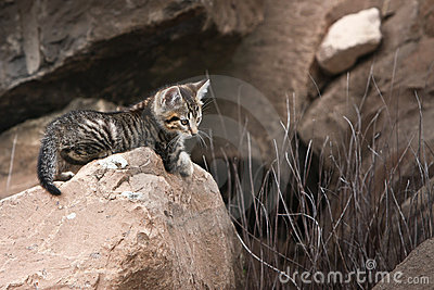 Cute little wild kitten on rock
