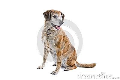 Cute mongrel dog