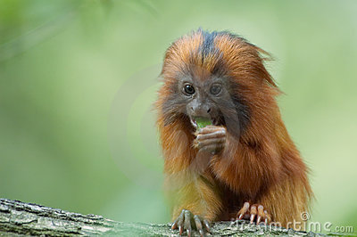 Cute monkey eating