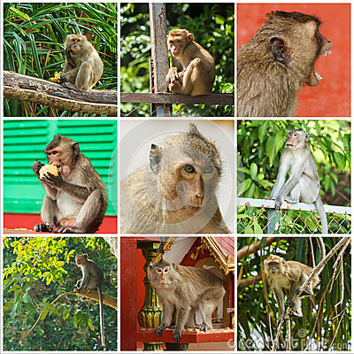 Free Cute Monkeys Royalty Free Stock Photo - 50849665