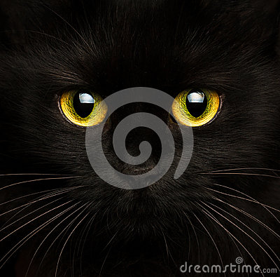 Free Cute Muzzle Of A Black Cat Close Up Stock Photography - 78699642