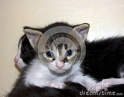 Cute not purebred kitten