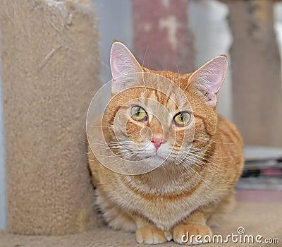 Cute orange cat sitting on a perch