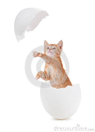 Free Cute Orange Kitten Hatching From An Egg. Royalty Free Stock Photo - 32239455