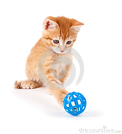 Cute Orange Kitten Playing with a Toy on White