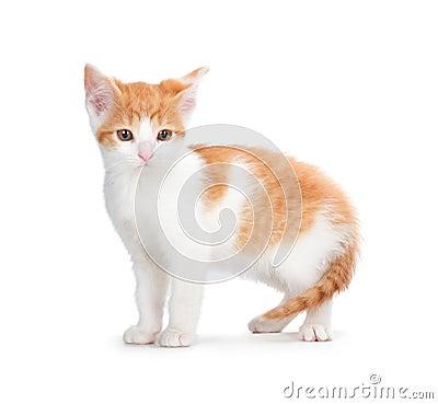 Cute orange kitten on a white background