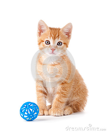 Free Cute Orange Kitten With A Toy On White Stock Images - 25519494