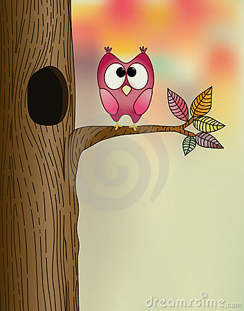 Cute owl on a branch