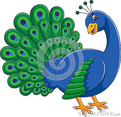 Cute Peacock Vector Illustration Cartoondealercom 67647550